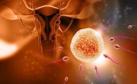 5 mythen over bevruchting
