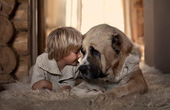 Eerlijk zijn: jongetje en hond