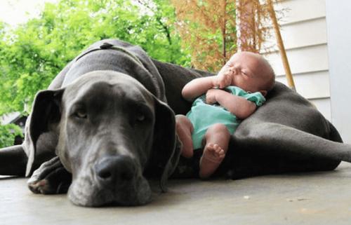 Het voorbereiden van je huisdier op een baby