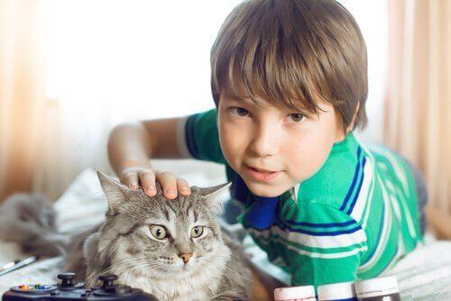 Jongen aait kat