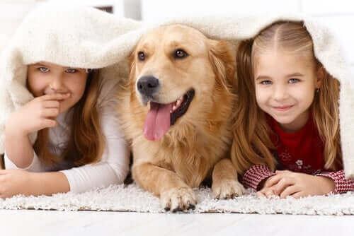 Kinderen met een golden retriever