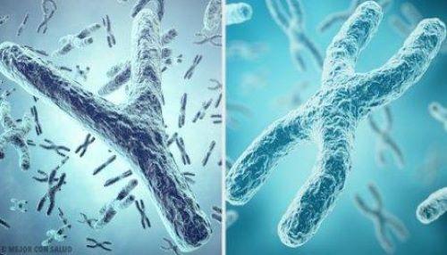 X en y chromosomen
