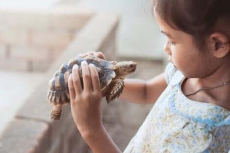 Verbeteren van het zelfvertrouwen door middel van de schildpadtechniek