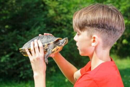 Gevolgen van de schildpadtechniek op het zelfvertrouwen