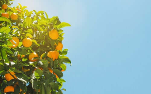 Hoe de gehechtheidstheorie met sinaasappels uit te leggen?