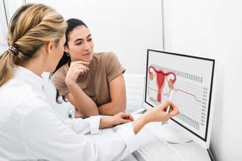 De rol van de ovulatie bij vrouwelijke voortplanting